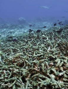 Coral bleaching caused by warmer, more acidic waters threatens Kiribati's ecology and economy. (Photo: Embassy of Kiribati)
